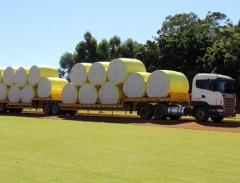 Preço do algodão para de cair no Brasil